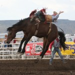 The horses make it look so acrobatic as they attempt to put the cowboy on the ground.