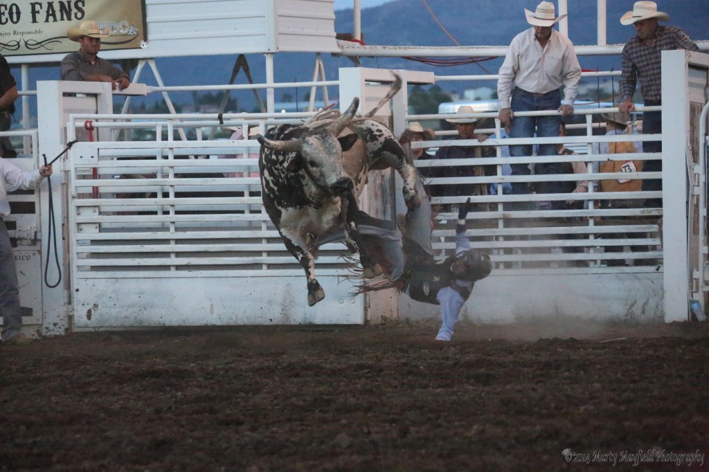 Man and bull part ways in less than 8-seconds as the bulls put every cowboy on the ground early Saturday night at the Raton Rodeo