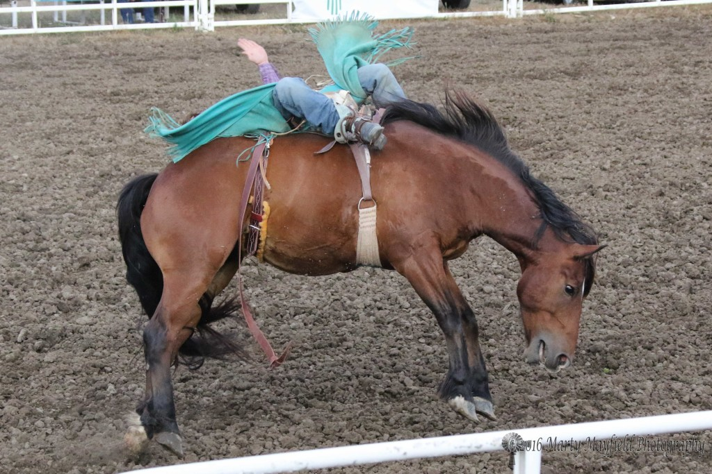 Tyler Berghuis, a college freshman, manages to hold on as rides to the buzzer at Friday night edition of the Raton Rodeo