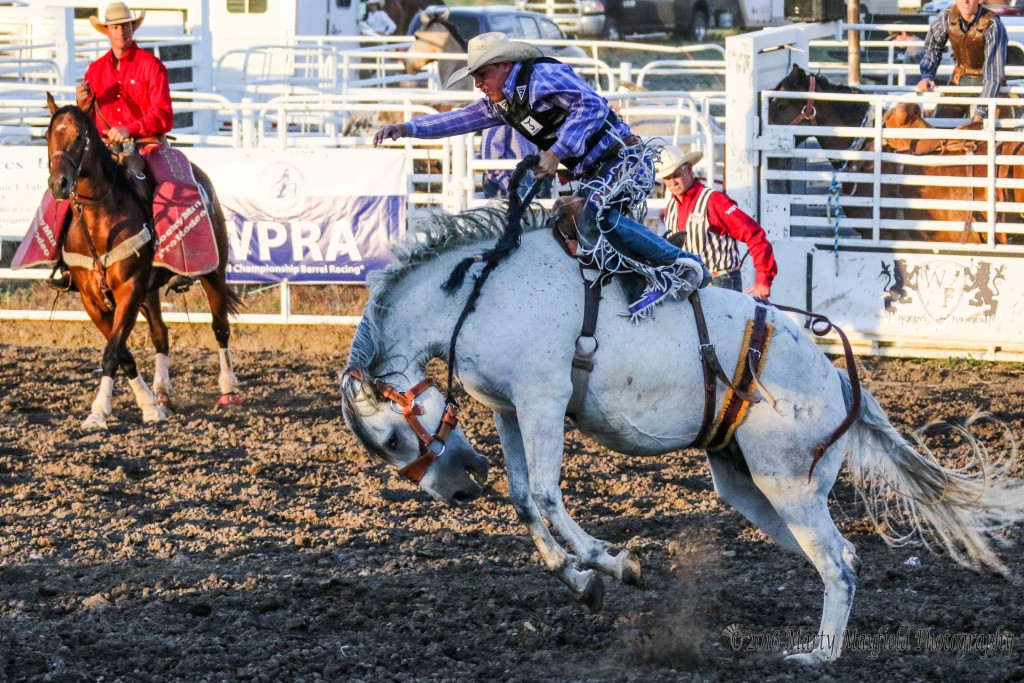 Over the weekend the horses took the win in the Saddle Bronc competition with 6 out of 10 rides. Jace Lane however rode to an 81 score Saturday evening.