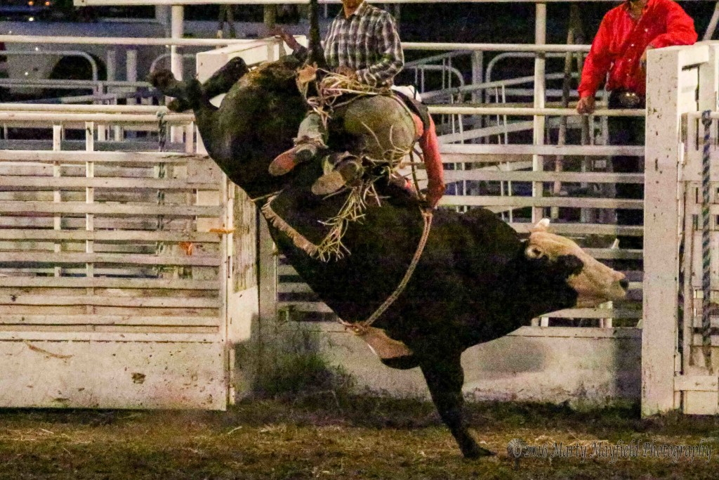 Channing Moore like all of the other cowboys didn't make the 8-second ride on his bull Saturday evening. The bulls take the Raton Rodeo 15-0.