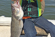 walleye_crop
